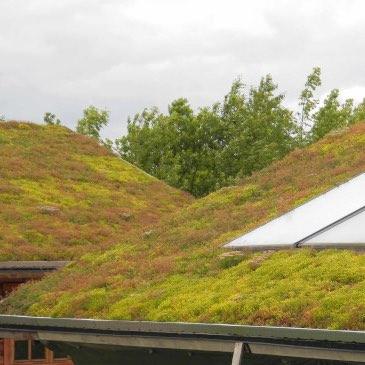 Vorteile der Dachbegrünungen